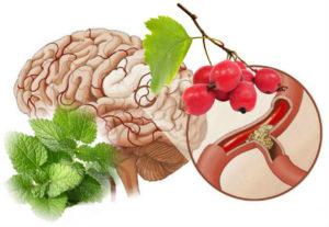 Какие напитки расширяют сосуды головного мозга. Терапевтические варианты борьбы с заболеванием. Правильный образ жизни