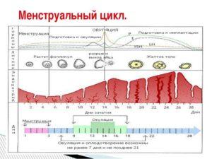 Изменение цикла месячных в большую сторону. Месячный цикл: норма и отклонения