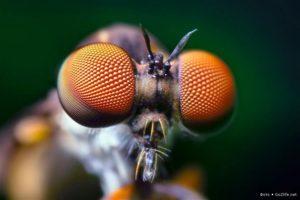 Как видят мир насекомые? Как видят мухи человека? Интересные факты о зрении насекомых