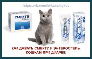 Дозировка смекты для котенка 2 месяца. Как давать Смекту котёнку — инструкция по применению и дозировка. Главный показатель - возраст животного