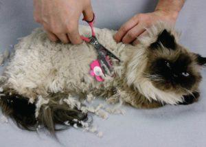 Колтуны и волосяные катышки у кошек. Почему у кошки появляются колтуны? Как бороться с колтунами у кошек
