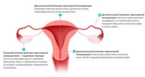 Когда наступает овуляция после отмены противозачаточных таблеток? Овуляция и беременность при приеме противозачаточных