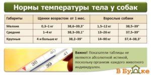 Норма температуры у собаки лабрадор. Что делать если у собаки температура. Когда следить за температурой тела собаки