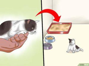 Как отучить котенка от сосания. Как отлучить котят от кошки для передачи новым хозяевам. Сроки и общая информация о вскармливании котят