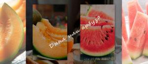Что полезнее для организма — дыня или арбуз. Дыня и арбуз: сравниваем