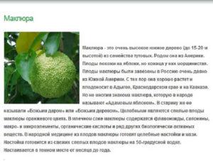 Адамово яблоко от каких болезней помогает. Что лечит Адамово яблоко: описание, состав и принцип действия
