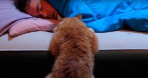 Почему кошка не дает спать по утрам? Что делать, если кот орет и мяукает по ночам без причины? Почему кошки будят по утрам