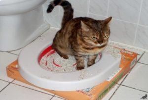 Кот поносит третий день. У кота диарея, что делать? Понос после стерилизации кошки
