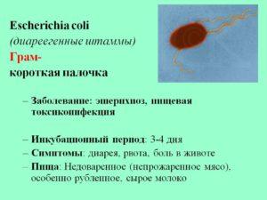 Что такое е coli. Кишечная палочка - симптомы и лечение. Эшерихия коли в моче – осложнение после операций