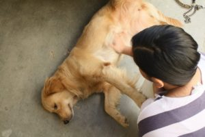 Спазмы у собаки симптомы. Мышечные судороги у собаки: причины, симптомы и лечение