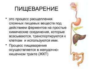 Что долго переваривается в желудке. Факторы, влияющие на пищеварение. Процес пищеварения в организме человека