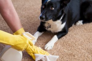 Что делать если собака гадит под дверью. Какой запах гарантировано отпугнет собак от любимого ковра или газона? Как избавиться от незваных питомцев