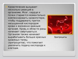 Рекомендуется при большой кровопотере. Обновление крови в организме. Как помочь организму