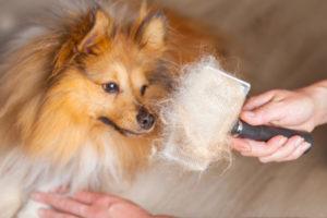 Почему собака сильно линяет зимой. Осеннее обновление — линька у собак: когда она бывает, что делать, какие витамины давать? Дополнительные мероприятия во время линьки
