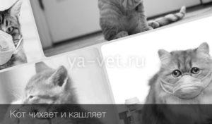 Кот кашляет с хрипом. Почему кот кашляет и что при этом делать