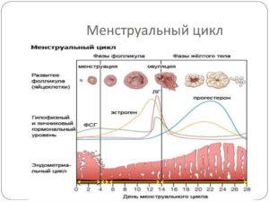 Почему перед месячными морозит. Все о месячных Озноб перед месячными: патологии и физиологические причины