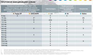 Дегельминтизация и прививки немецкой овчарки. График прививок и правила вакцинации немецких овчарок. Подготовка к вакцинации и ее стоимость