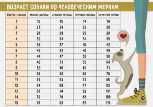 Как определить возраст маленькой собаки. Учимся определять возраст щенка или взрослой собаки. Альтернативные методы определения возраста питомца