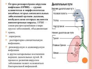 Воспаление дыхательных путей, симптомы и лечение. Как лечить верхние дыхательные пути