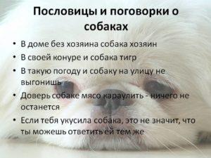 Пословицы со словом собака и их значение. Пословицы и поговорки про собак. Крылатые выражения про собак