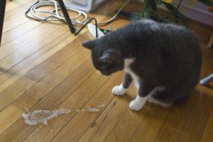 Если кошку рвет шерстью. Почему кошка выдергивает себе шерсть