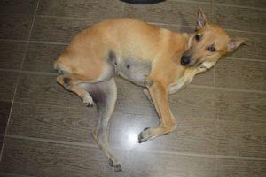 Почему у собаки дергается задняя лапа. Что делать, если у собаки судороги