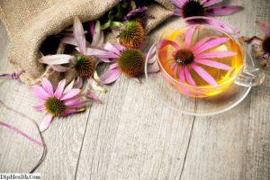 Заготовка эхинацеи в домашних условиях. Эхинацея – противопоказания. Средство от простуды