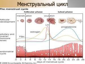 Может ли увеличиться цикл месячных. Менструальный цикл: норма, сбои, нарушения