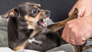 Взрослая собака всего боится что делать. Как отучить собаку бояться людей: советы и рекомендации. Подчиняется - не значит боится
