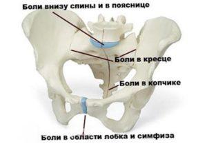 Почему болят тазовые кости после родов? женское здоровье. После родов болит таз, кости таза (тазовые кости)