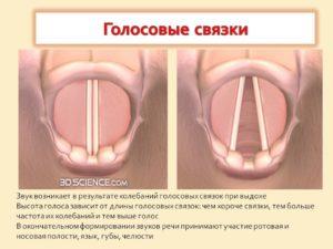 Как лечить и беречь голосовые связки. Советы врача вокалисту. Как восстановить голосовые связки в домашних условиях