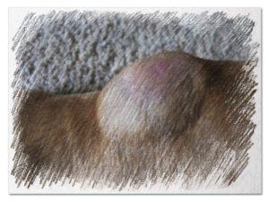 После прививки у собаки появилась шишка на холке — отвечает ветврач. Шишка у собаки после прививки от бешенства
