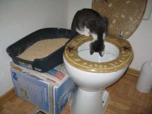 Кот ходит под ванну что делать. Почему кошка гадит в раковину или ванну? Причины, по которым кошка гадит
