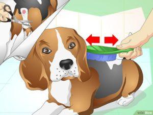 У собаки запор как помочь дома. Запор у собаки: помощь и лечение. Причины запора у собак