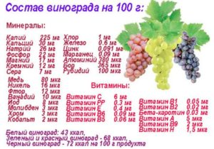 Толстеют ли от винограда: сколько в нем калорий и какое количество ягод можно съедать в день. Можно ли есть виноград при похудении