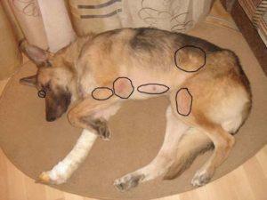 Щенок очень сильно скулит. Почему собака скулит. Почему собака скулит, дрожит, прячется