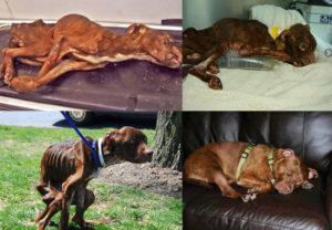 К чему снится спасать собаку от человека. К чему снится спасать