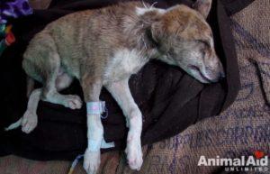 Сонник толкование снов спасать собаку. Спасать тонущую собаку