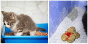Понос у кошки: виды, причины, лечение. Запор у кошки или изменение цвета кала