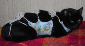 Стерилизация кошек когда снимать попону. Сколько кошке ходить в бандаже после стерилизации. У кошки после операции распухла лапа