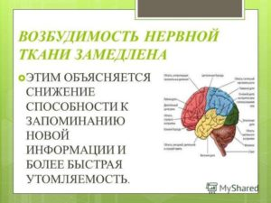 Как снизить возбудимость нервной системы. Повышенная нервная возбудимость