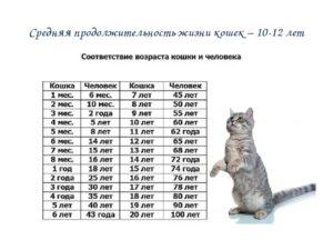 11 лет кошке сколько по кошачьи. Определяем возраст кошек по человеческим меркам. Способы соотношения возрастов человека и кошки