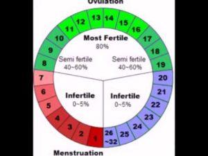 Безопасные дни беременности до месячных. Опасные дни для зачатия