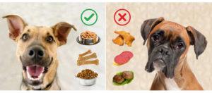 Разбираемся, чем нужно кормить свою собаку, чтобы она быстро набрала вес. Верные советы о том как откармливают собак Как поднять вес щенкам если худые