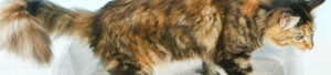 Кошка ничего не ест и поносит. Понос у кошек и котов