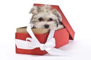 Можно ли дарить щенка? Что подарить собаке на новый год и день рождения своими руками Что подарить собаке на день