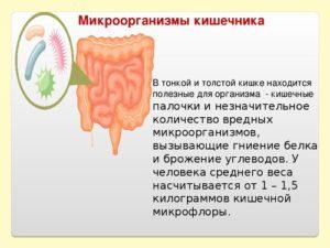 Какие продукты вызывают брожение в кишечнике. Брожение и гниение в кишечнике