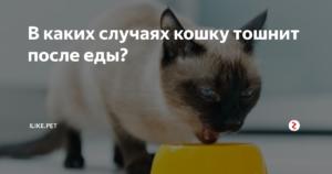 Кошку тошнит после еды непереваренной пищей. Кошку рвет после еды: что делать? Что делать нельзя