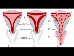 Менструация спустя месяц после родов. Почему месячные идут через каждые две недели