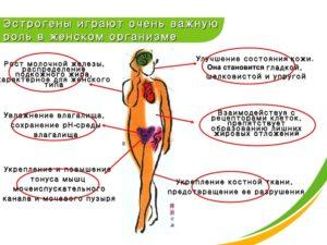 Как уравновесить гормональный фон женщины. Какие гормоны отвечают за нормальную жизнедеятельность женского организма? Причины и симптомы гормонального сбоя